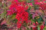 Vendesi piante in varieta x info cel 329-7220471 €5 -...