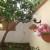 7  giardino fiori